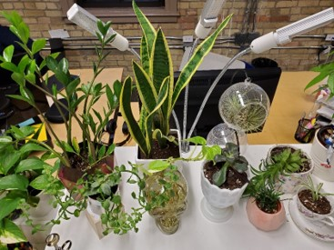 Awesome Plant Selection