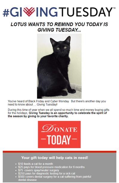 Gifford Cat Shelter giving tuesday email