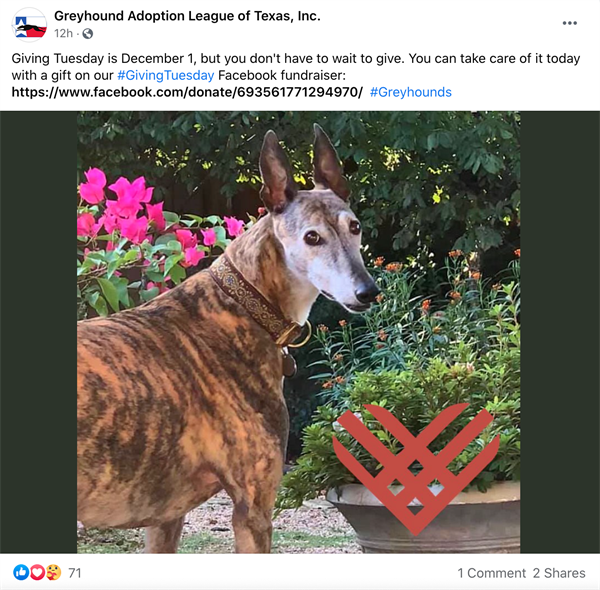 Greyhound Adoption League of Texas