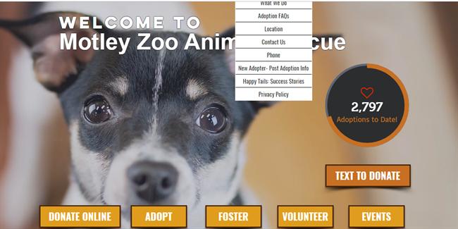 Motley Zoo best nonprofit website