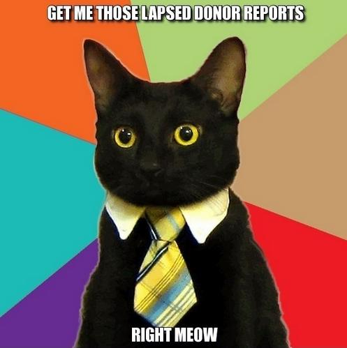 nonprofit cat meme