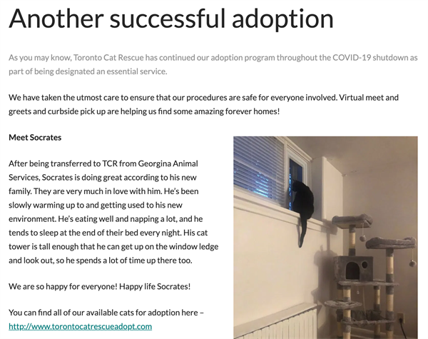 toronto cat rescue blog