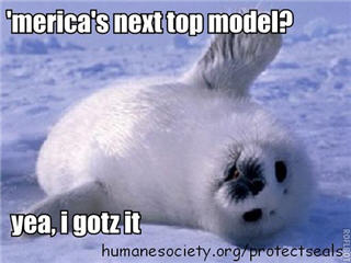 LOLseals - Humane Society photo caption contest